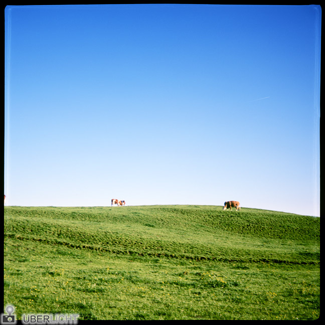 Agfa Click II, roll film camera, review, cow paddock, Germany, Bavaria